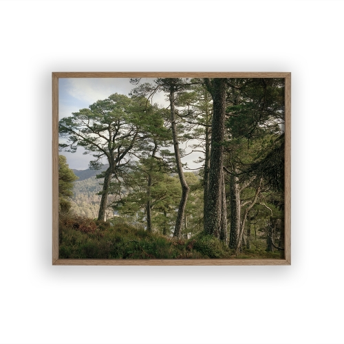 FRAMED PRINT Glen Affric