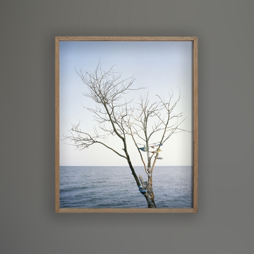 FRAMED PRINT Boreal tree 51